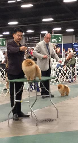 POMERANIAN NATIONALITY