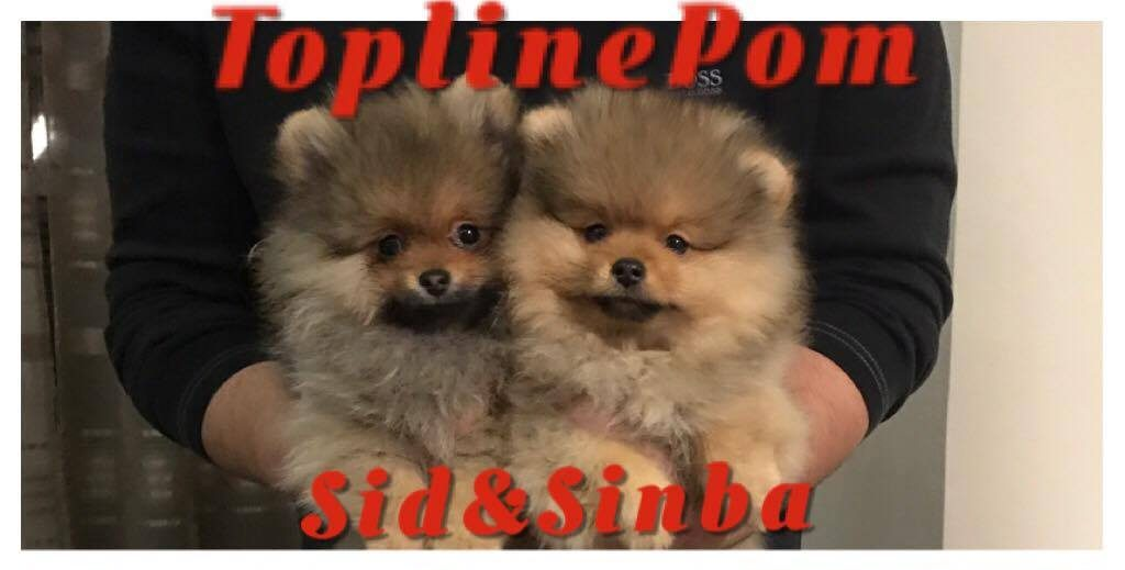 Sid: ToplinePom Top Of The Sky