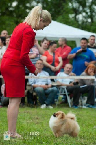NATIONAL DOGSHOW IN MISKOLC 13.05.2017