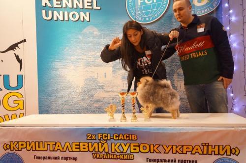 Dogshow in Kiev 2015